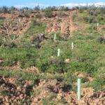Programada una plantación masiva de especies forestales autóctonas con motivo del Día de Andalucía 1