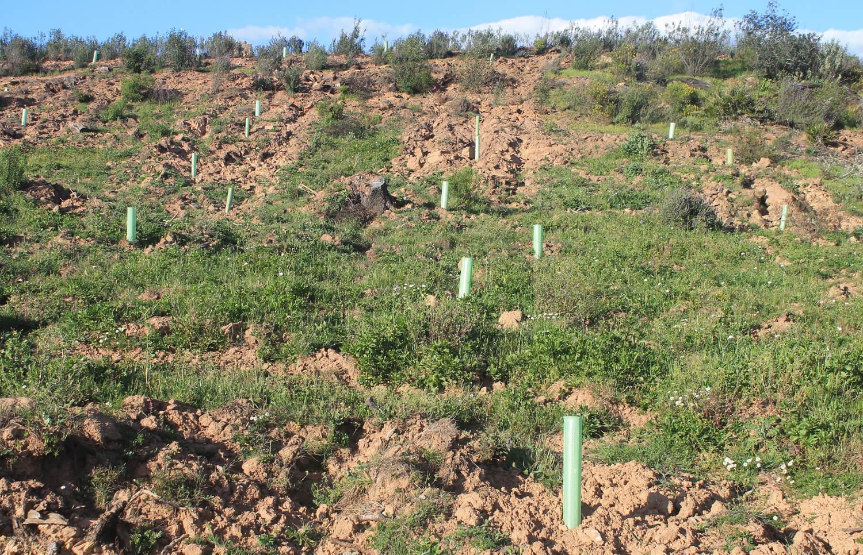 Programada una plantación masiva de especies forestales autóctonas con motivo del Día de Andalucía