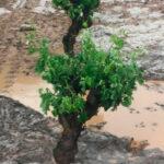 Plantean que las ayudas de Castilla y León a las pólizas de seguros agrarios se hagan por DNI y no por póliza contratada 1
