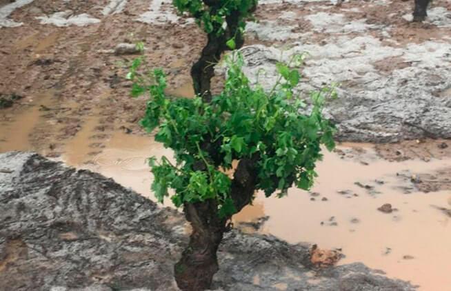 Plantean que las ayudas de Castilla y León a las pólizas de seguros agrarios se hagan por DNI y no por póliza contratada