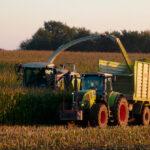 Los precios de los cereales sufren un parón en sus cotizaciones y entran en una senda de cierta tranquilidad 1