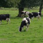 Lactalis sube el precio de la leche a los ganaderos en Francia y los rebaja, junto a Reny Picot, a los ganaderos en España 1