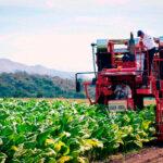 La Junta extremeña defiende la inclusión de la región tabaquera en las ayudas de la PAC un día antes de que se inicien las protestas 1
