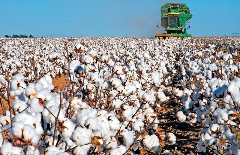 Cooperativas Agro-alimentarias de España presenta en Bruselas los retos y avances del sector algodonero español ante el Pacto Verde