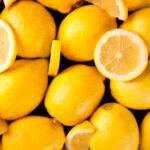 ASAJA Murcia crea la Sectorial de Cítricos para «buscar soluciones» a la actual crisis de precios en el limón 1