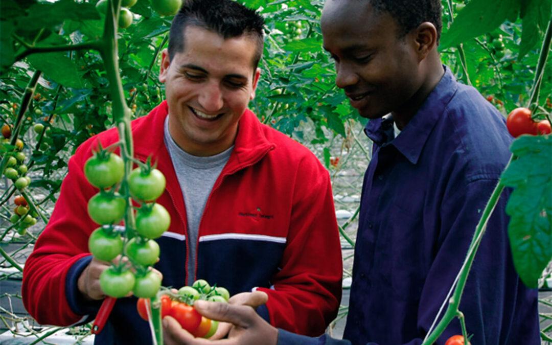 Denuncia ante la alteración grave que está atravesando el mercado de tomate europeo por la importación de terceros países a precios bajos