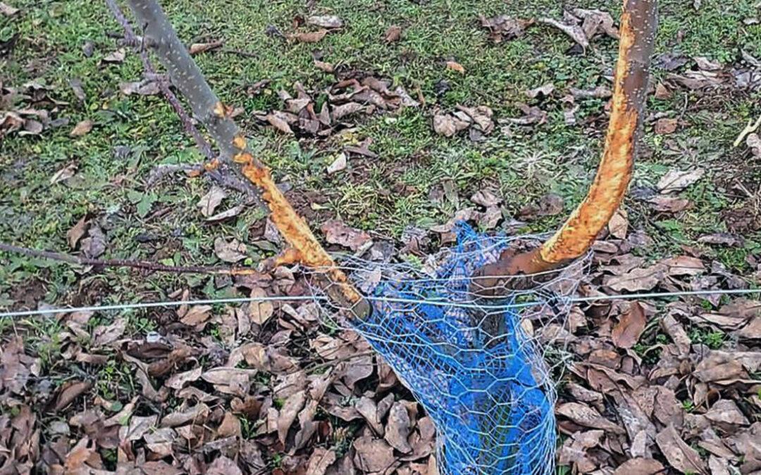 Daños en los cultivos por la fauna salvaje: Estudian pedir indemnizaciones por la desidia e inacción de las administraciones