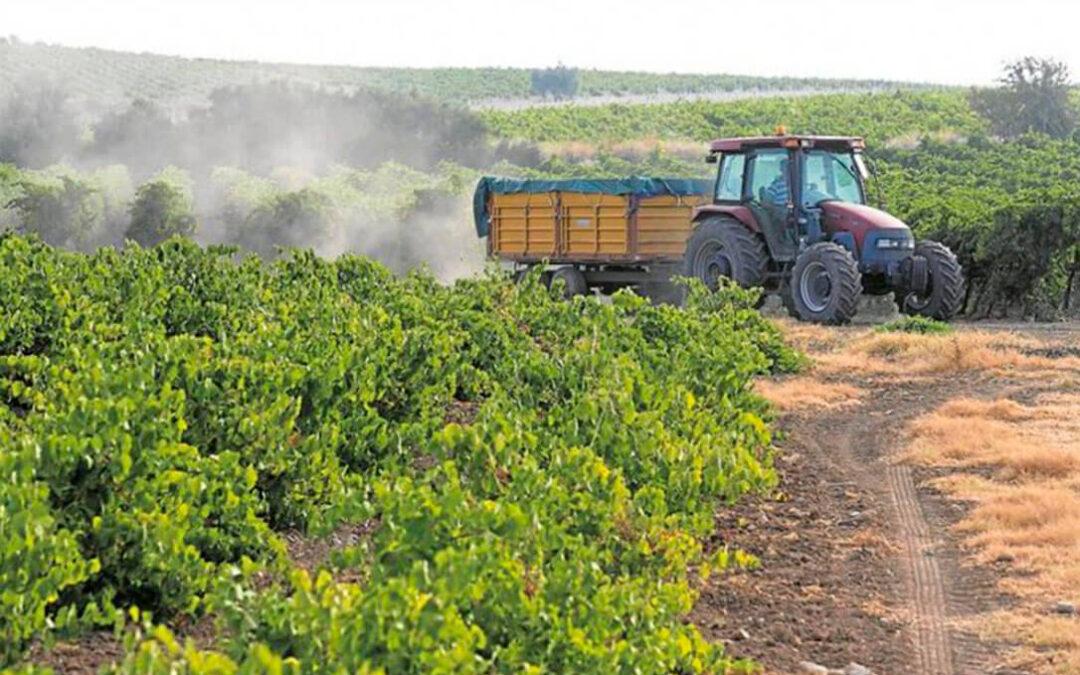 Medidas para impedir que los viticultores abandonen el sector: Una vendimia en verde «más ambiciosa» y destilación de crisis