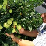 Agromaster asegura la óptima nutrición y un crecimiento uniforme de los frutales y otros cultivos leñosos 1