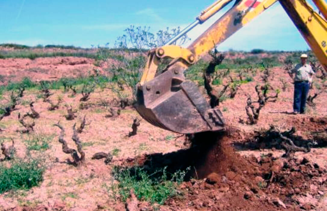 La Rioja procede al arranque de viñedos de un viticultor porque la superficie real era superior a la inscrita