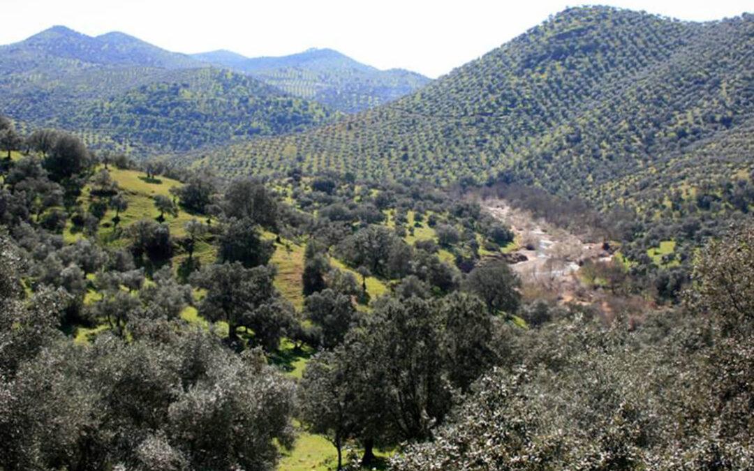 Satisfacción por la decisión de la Junta de descarte declarar a Sierra Morena como parque natural por las restriciones que implicaría