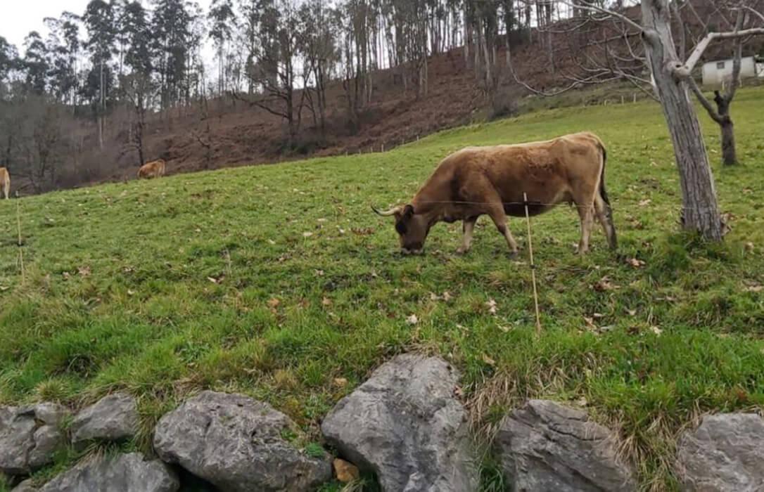 Acusan al gobierno asturiano de «frenar» el proceso de clasificación de montes vecinales de mano común con obstáculos artificiales