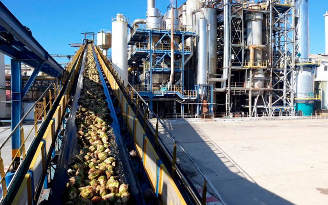 Azucarera abre la fábrica de La Bañeza el día 15 para arrancar la nueva campaña pero no cambia su contrato pese a las críticas de sector