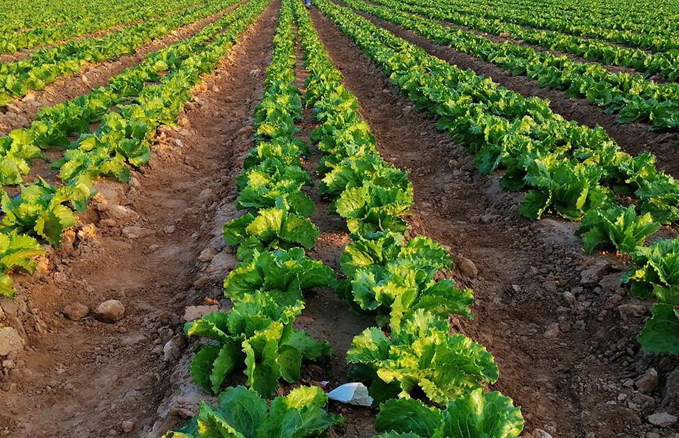 Corteva Agriscience elige a Dadelos Agrosolutions para la comercialización global de bioestimulantes