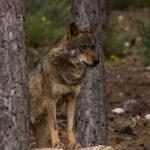 Del comité científico de la Covid al del lobo: Nadie sabe quiénes han tomado las decisiones y el Gobierno se niega a decirlo 1