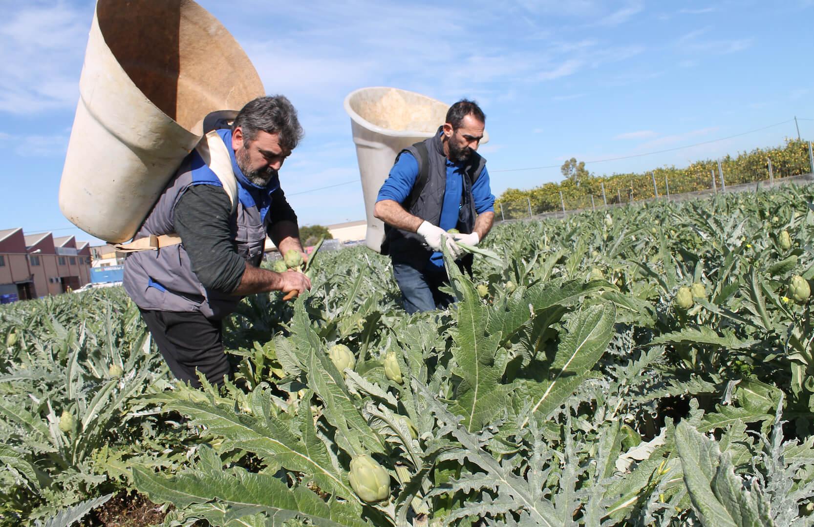Las cosas claras: El sector agrario rechaza el concepto de coste efectivo de producción en la Ley de la Cadena por ser muy confuso