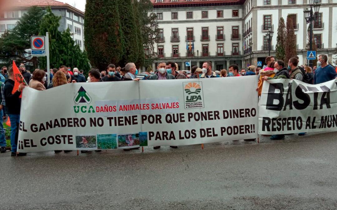 Protección del lobo: El Miteco no acepta ninguna alegación de los ganaderos y estos piden la disolución del Ministerio