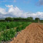 Más allá de los chistes, el cultivo del cannabis se está convirtiendo en una alternativa de futuro de rápido crecimiento 1