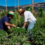El Pacto Verde europeo divide a la agricultura entre sus oportunidades y amenazas dentro de la PAC: Del primer paso a un tiro en el pie 1
