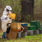 Todo el sector apícola extremeño denuncia la dramática situación que pone en peligro el sostenimiento económico de muchas explotaciones 1