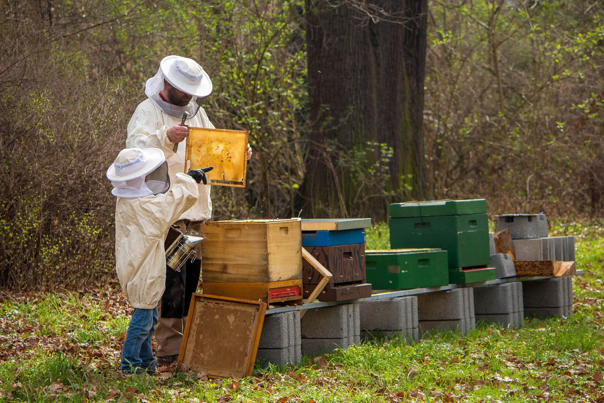 Todo el sector apícola extremeño denuncia la dramática situación que pone en peligro el sostenimiento económico de muchas explotaciones