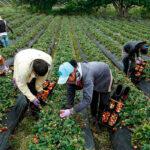 Una situación ridícula: Mientras la CE asume que la transicion verde tendrá un coste sube un 9% la importación de frutas y hortalizas marroquíes 1