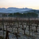 El Gobierno aprueba la norma que prorroga la validez de las autorizaciones para plantaciones de viñedo 1