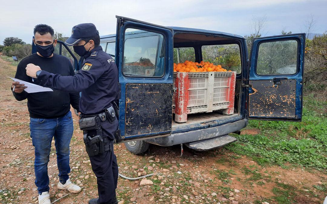 La Policía detiene a 28 personas en 110 inspecciones en el campo valenciano en los dos primeros meses del año