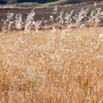Las malas hierbas no deben condicionar la protección de los suelos y los expertos advierten de que «su conocimiento es fundamental» 1