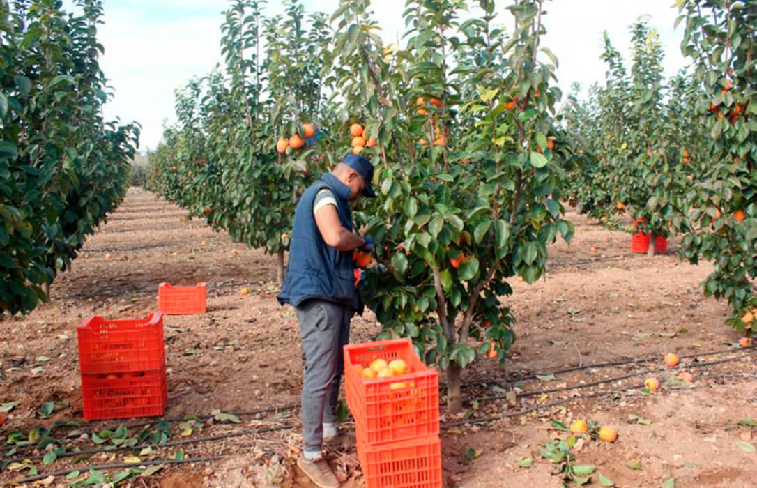 La cuadratura del círculo contra el campo: Descienden los ingresos brutos de los productores un 16%, pese a subir el 5% los precios