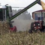 Una propuesta del Ministerio para los ecoesquemas de la nueva PAC aboca a una reducción de 20.000 hectáreas de maíz en León 1