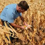 Las lluvias paralizan la siega de las últimas 5.000 hectáreas de maíz que siguen sin cotizar en una jornada con subidas moderadas 1