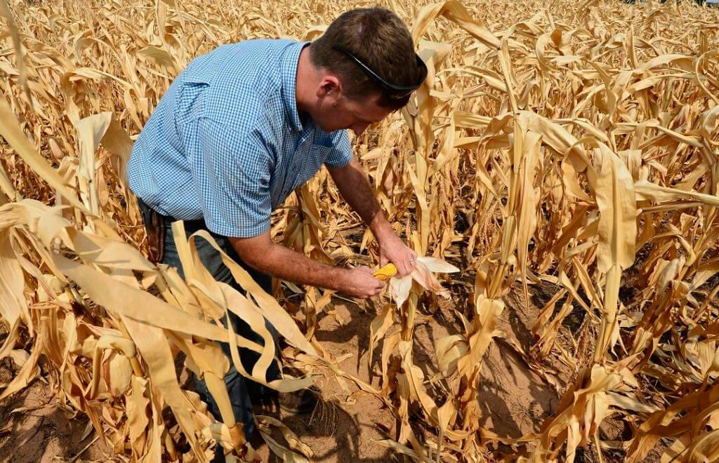 Las lluvias paralizan la siega de las últimas 5.000 hectáreas de maíz que siguen sin cotizar en una jornada con subidas moderadas