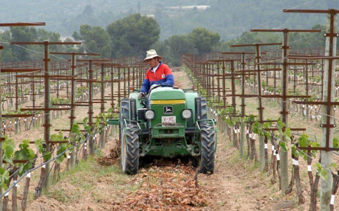 PAC: Europa estudia si la definición de agricultor genuino debe ser obligatoria o no y Planas asegura que en España se aplicará sí o sí