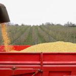 Los precios de los cereales mayoristas se dispararon casi literalmente con incrementos de hasta 6 euros en el maíz o 4,5 en la cebada 1