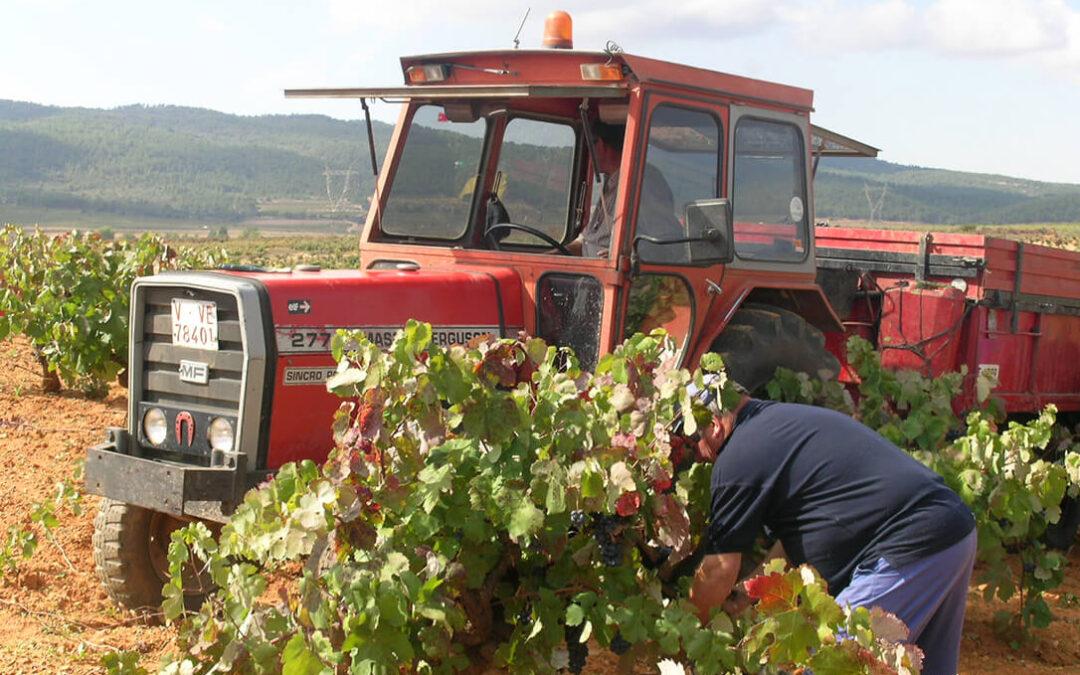 Lo que el Covid se llevó y no se recuperará: Pérdidas de 180 millones para los agricultores valencianos por el primer año de pandemia