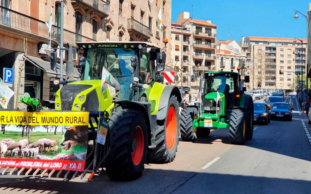 Salamanca toma el relevo y sus ganaderos también salen a la calle para protestar por la sobreprotección del lobo