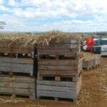 La presión de Trabajo para hacer fijos a los temporales se extiende por España e indigna porque «desconoce la realidad del sector agrario» 1