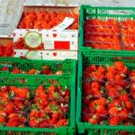 La guerra de precios hunde al sector de la fresa, que denuncia que «el mercado está saturado, pero de especuladores» 1
