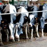 Producir leche para perder dinero: Los costes disparados hacen perder entre 2 y 3 céntimos por litro a cada ganadero 1