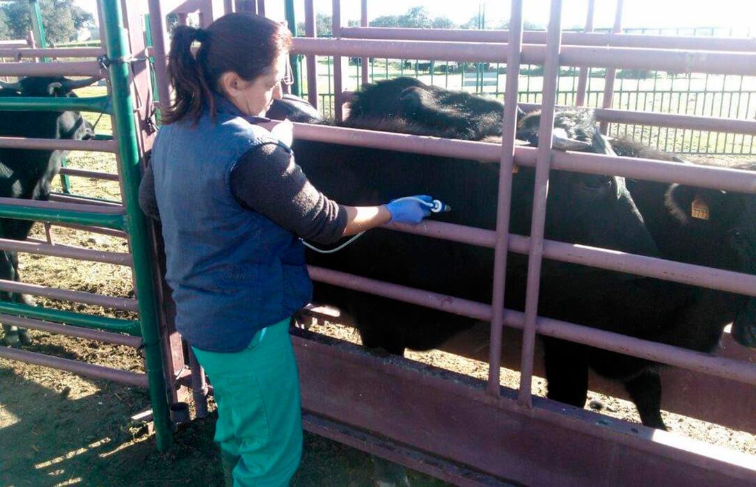 El otro relevo generacional: Las mujeres suponen ya el 70% de los veterinarios colegiados menores de 35 años en España