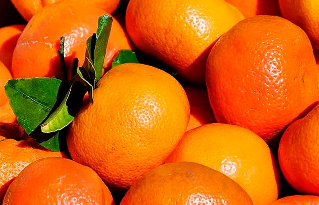 El abogado general de la UE quiere que un español pague por cultivar mandarinas marroquíes propiedad de la famalia real alauita