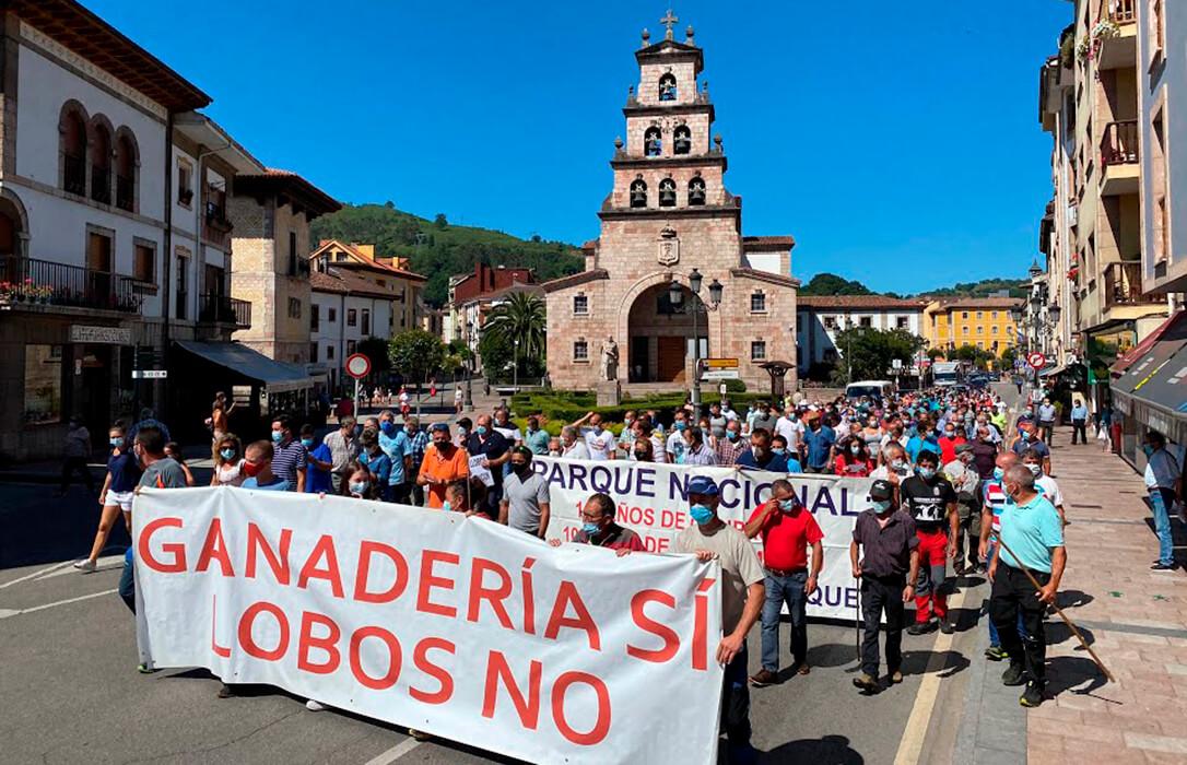 El arranque de la Caravana del Lobo contra su protección especial saca a la luz las diferencias entre el sector ganadero asturiano