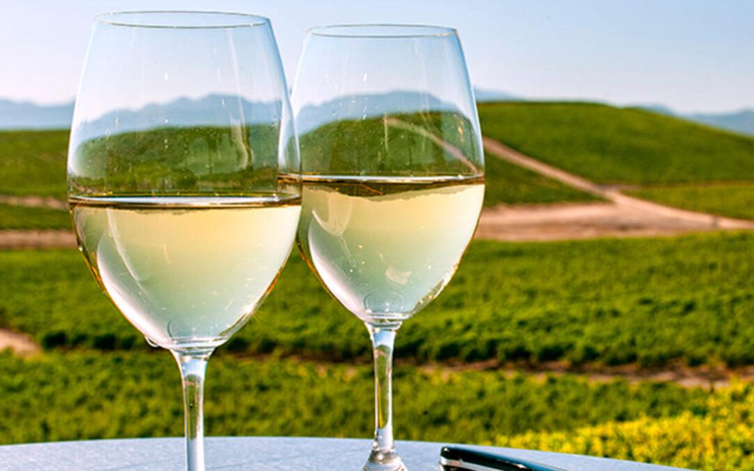 La cosecha de vinos blancos Condado de Huelva 2020 obtiene la calificación de 'buena'