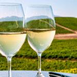 La cosecha de vinos blancos Condado de Huelva 2020 obtiene la calificación de 'buena' 1