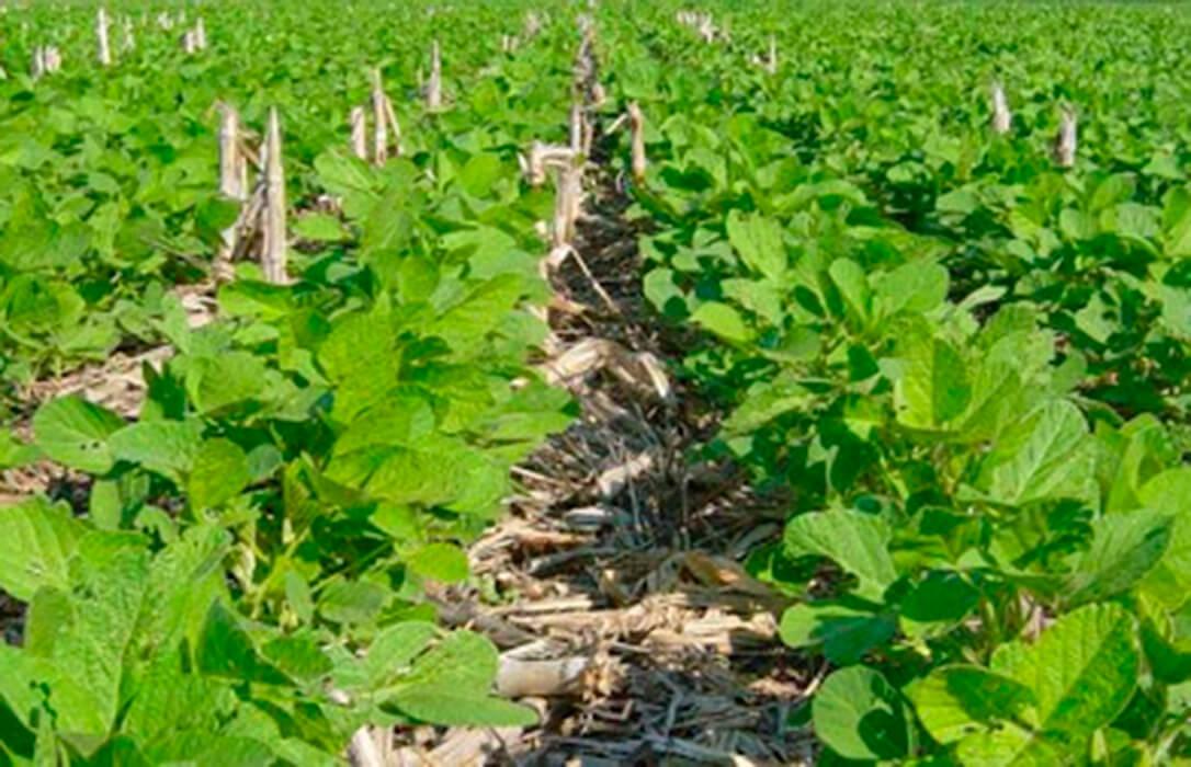 Alianza entre Corteva Agriscience y Symborg para ampliar el acceso de los agricultores a un producto biológico de fijación de nitrógeno