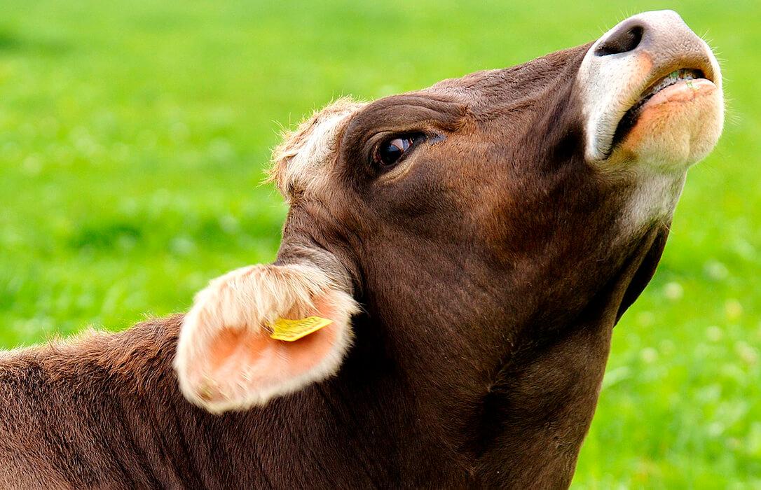 La ganadería no tiene que pedir perdón por existir