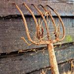 Críticas al Gobierno: La subida del paro en la agricultura es «la demostración del maltrato del Gobierno a las políticas agrarias» 1