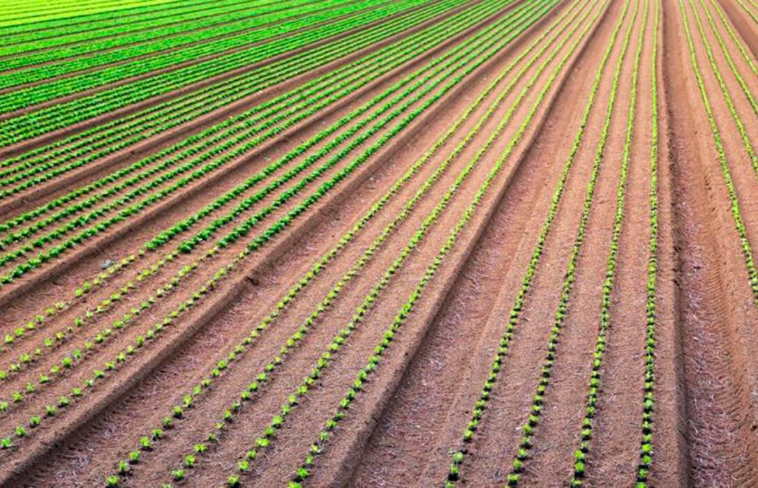 El Gobierno autoriza la distribución de 104,12 millones de euros para los programas de desarrollo rural de las CCAA