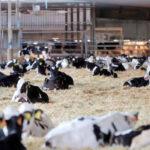 Una encuesta de ámbito europeo muestra el desconocimiento del sector ganadero por parte de la población 1